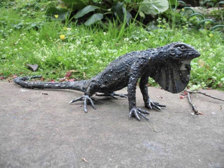 Anolis Lizard.